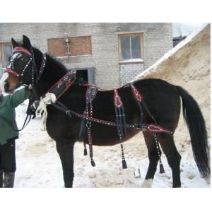 Упряжь выездная с цветными вставками купить в интернет магазине конной амуниции