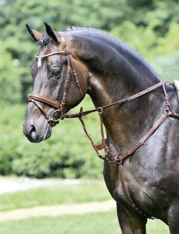 Нагрудник IMOLA, BUSSE купить в интернет магазине конной амуниции